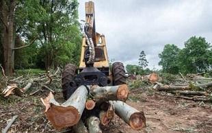 盗伐林木罪