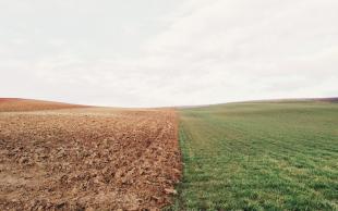 占用耕地盈利项目
