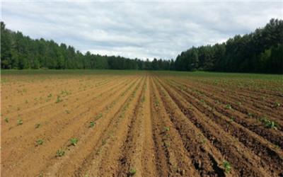 耕地保护的主要内容有哪些