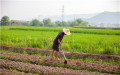 拖欠农民工工资打欠条可以要回吗